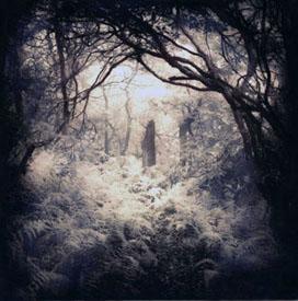 Into the Mist copy.jpg