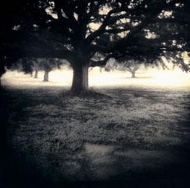Misty Oak copy.jpg