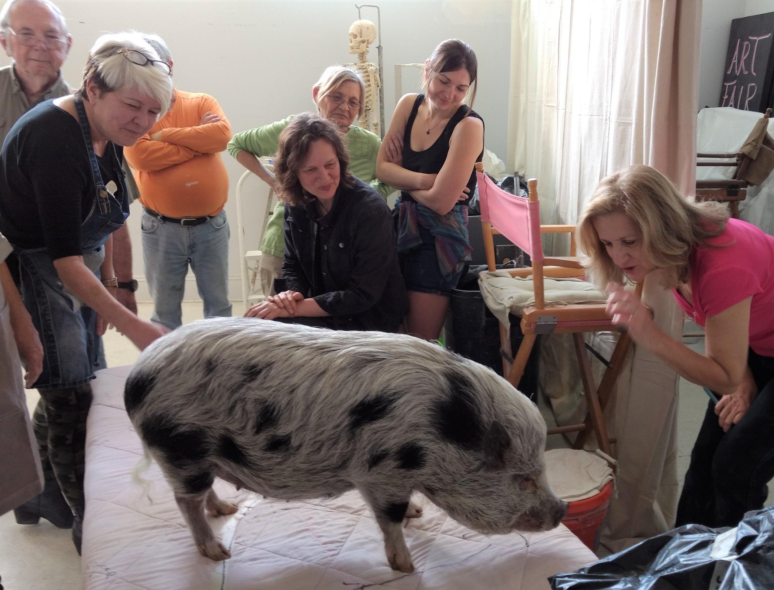 live porcine model Madame Grima