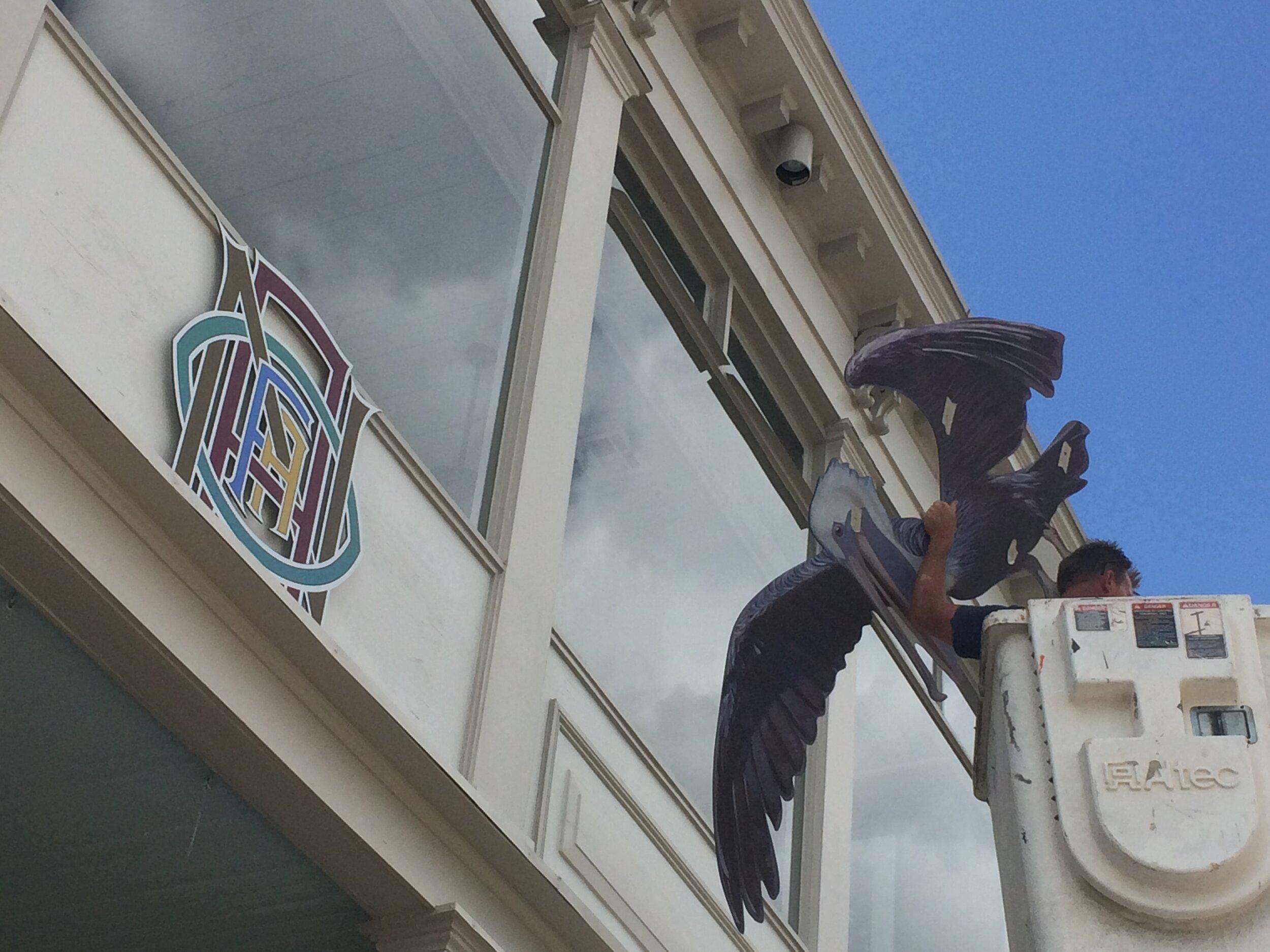 Auseklis' pelican taking flight