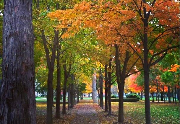 ND in Fall.jpg