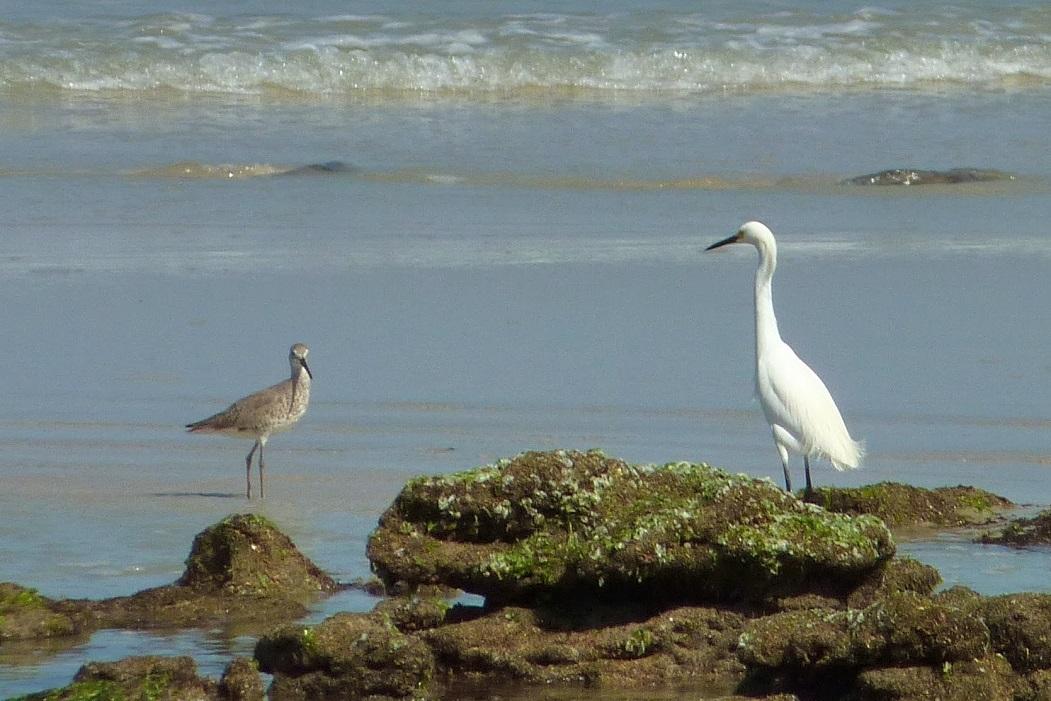 Wildlife in the Hammock