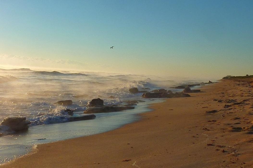 Ocean Mist in The Hammock