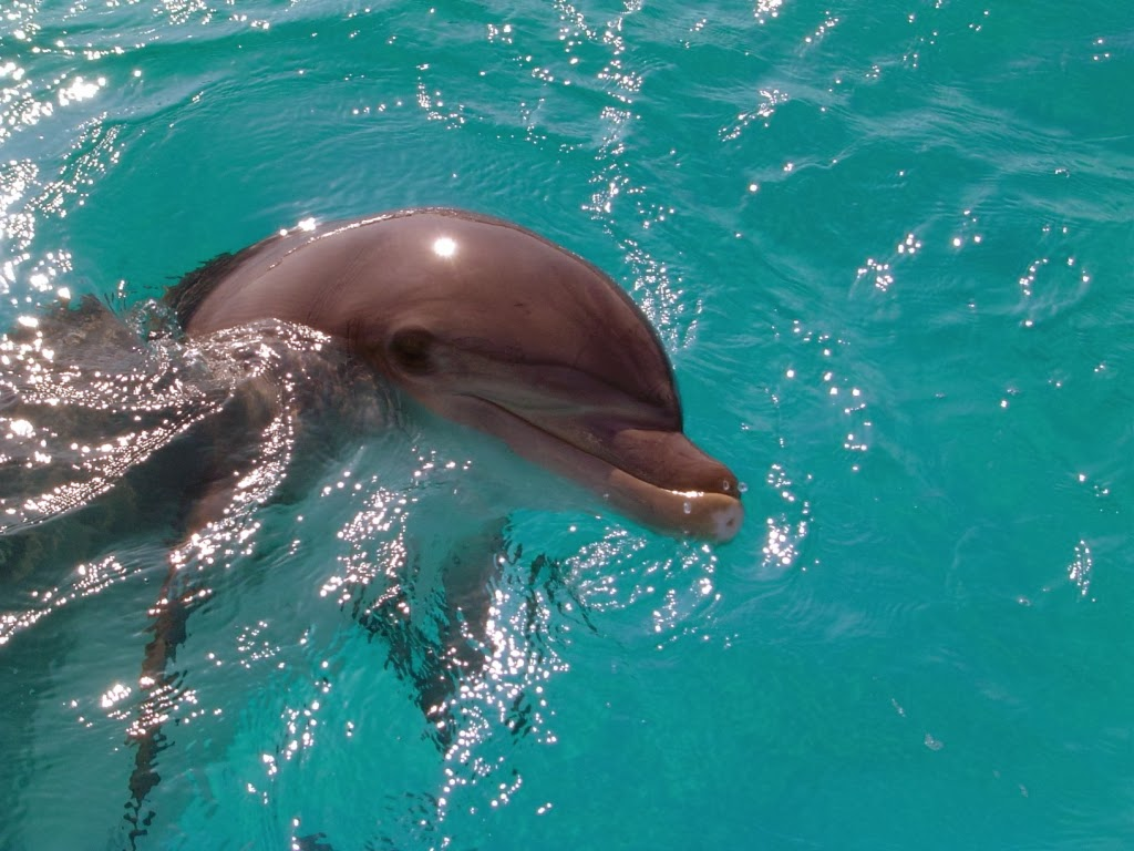 Learn about Marineland DOLPHIN Adventure