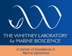 See what's going on at Whitney Labs