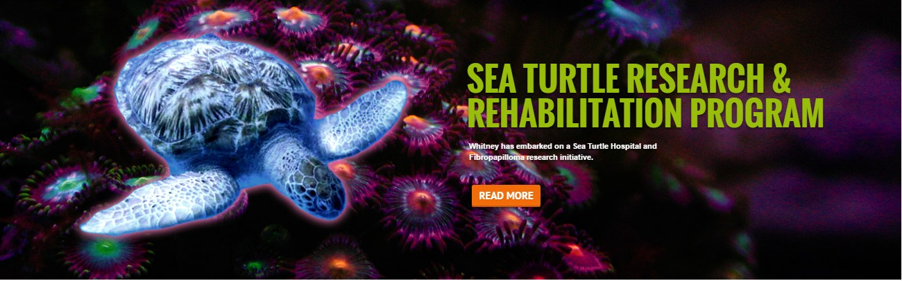 Learn about the Sea turtle hospital in marineland
