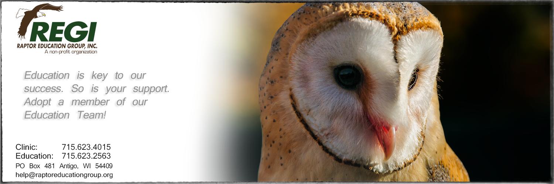 Raptor Education Group Adopt a Bird European Barn Owl.jpg
