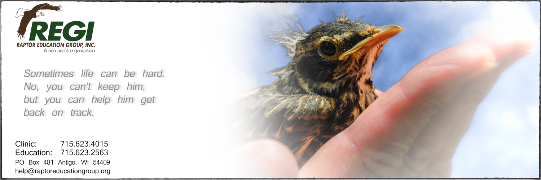 Raptor Education Group Help A Baby Bird Robin in Hand.jpg