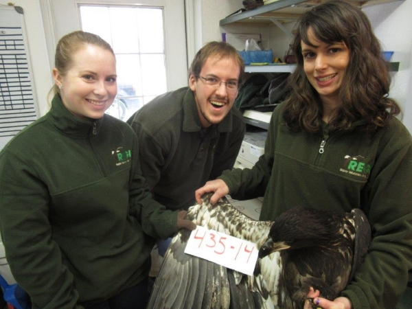 We'vejust completed the exit physical on this young Bald Eagle. He passed with flying colors!