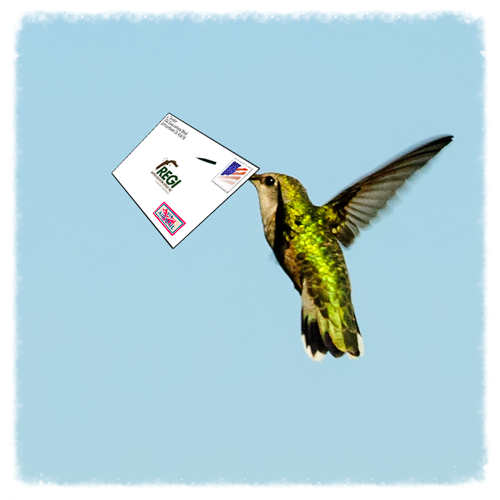 Raptor Education Group Inc air mail thumbnail.png