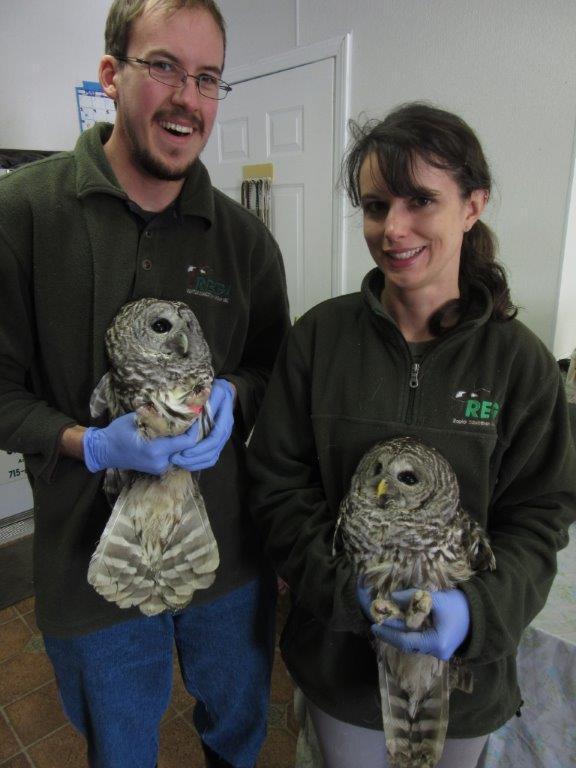 Raptor Education Group Inc Barred Owls w Rehabers