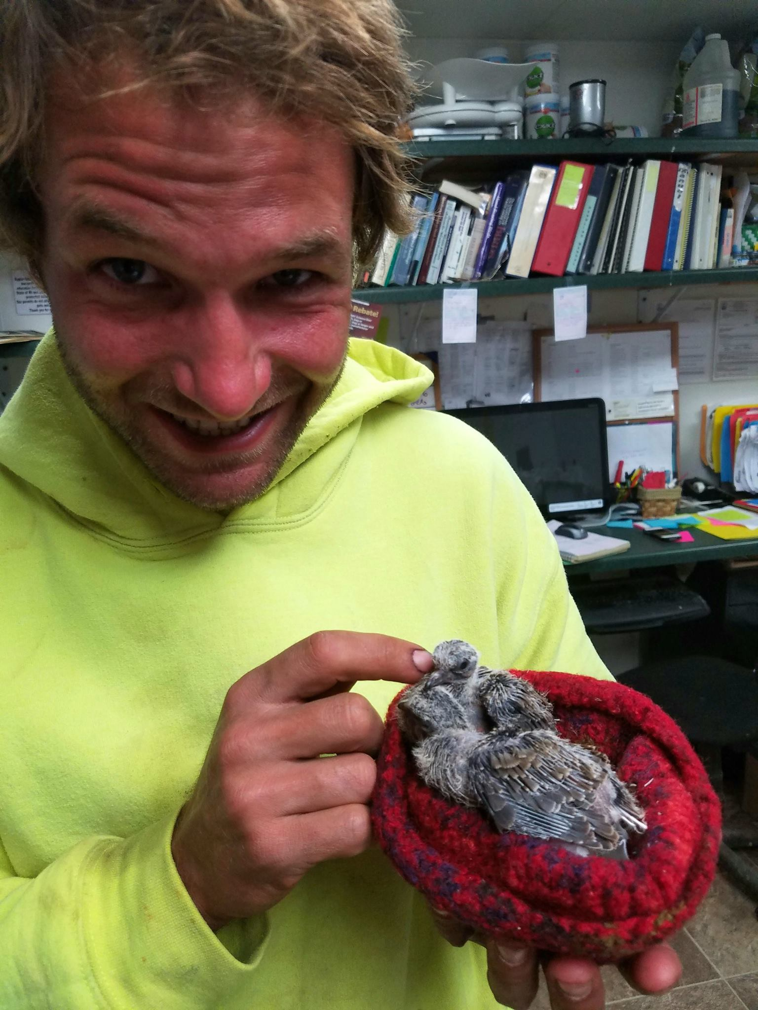 Thanks to Lee Fisher for rescuing this nest of young Mourning Doves.