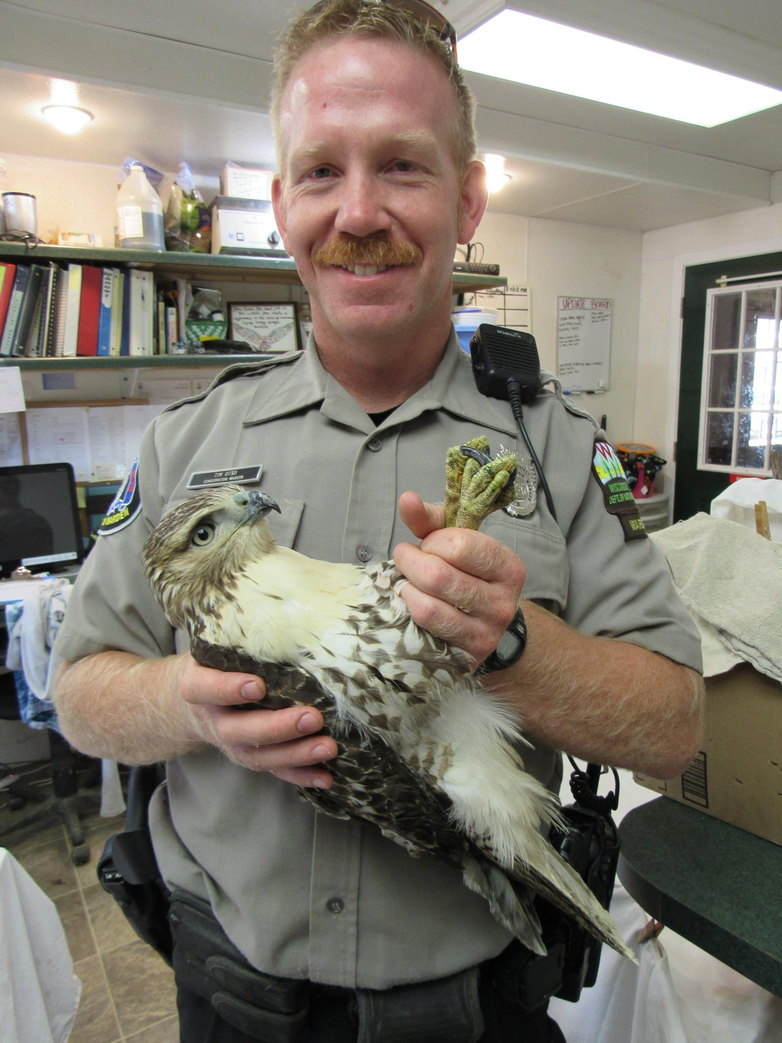 Thank you to WI DNR Warden Tim Otto for transporting this young Red-tailed Hawk to us!