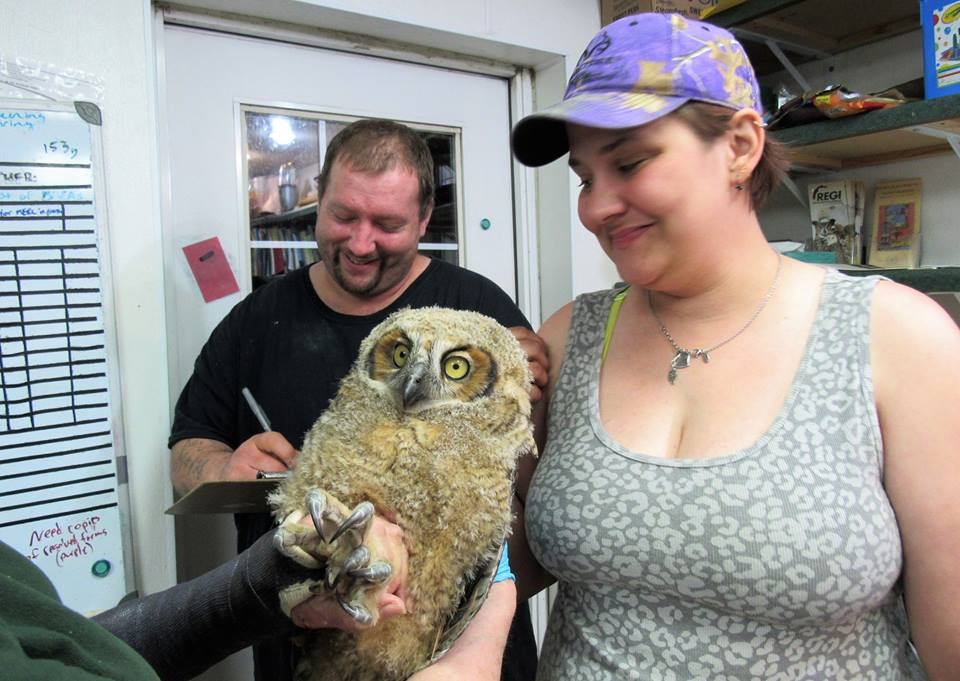 Mindy Litzen rescued this young Great horned owl from a busy street in Wausau.