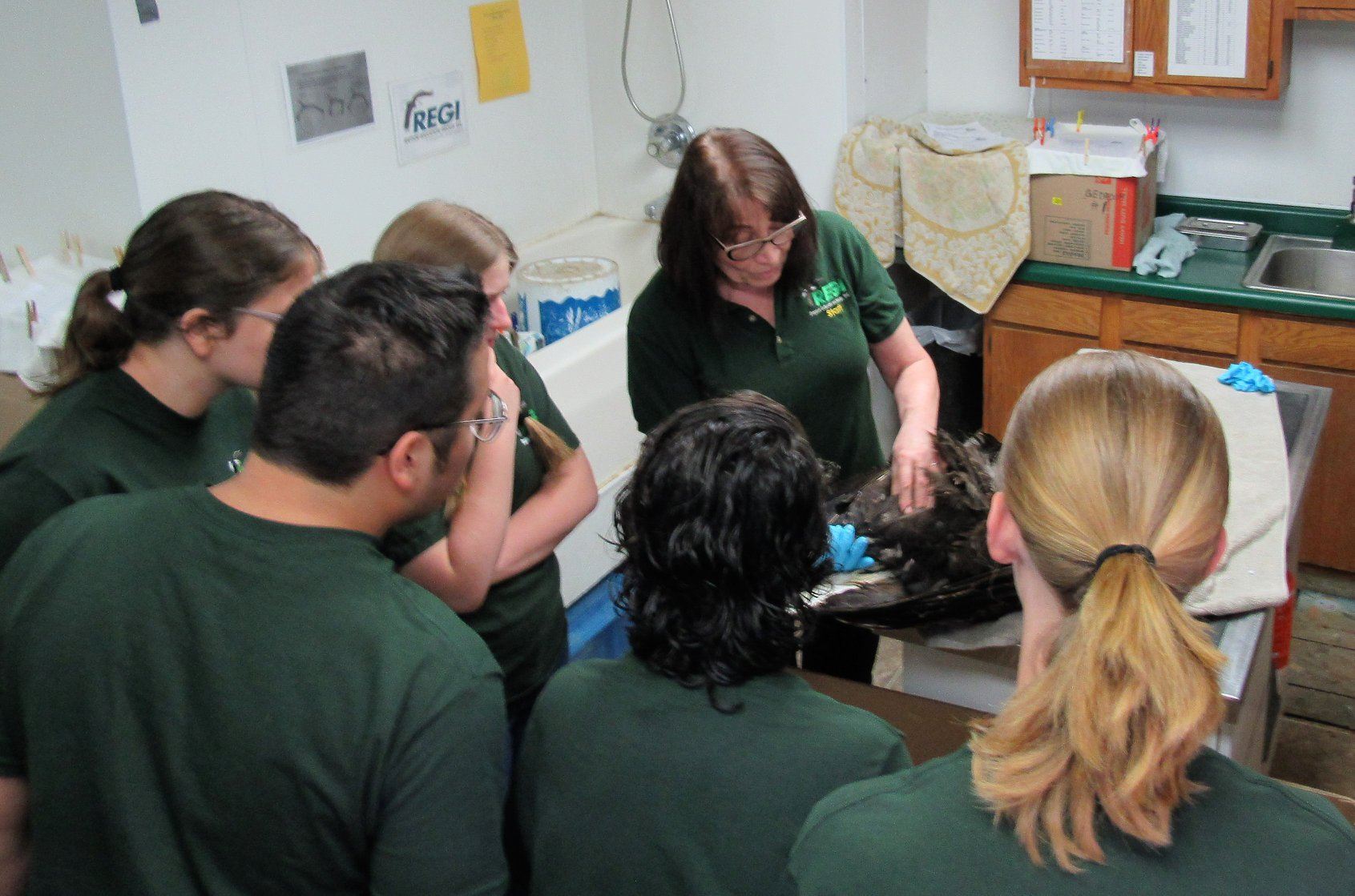 Interns first lesson about Bald eagle patients.