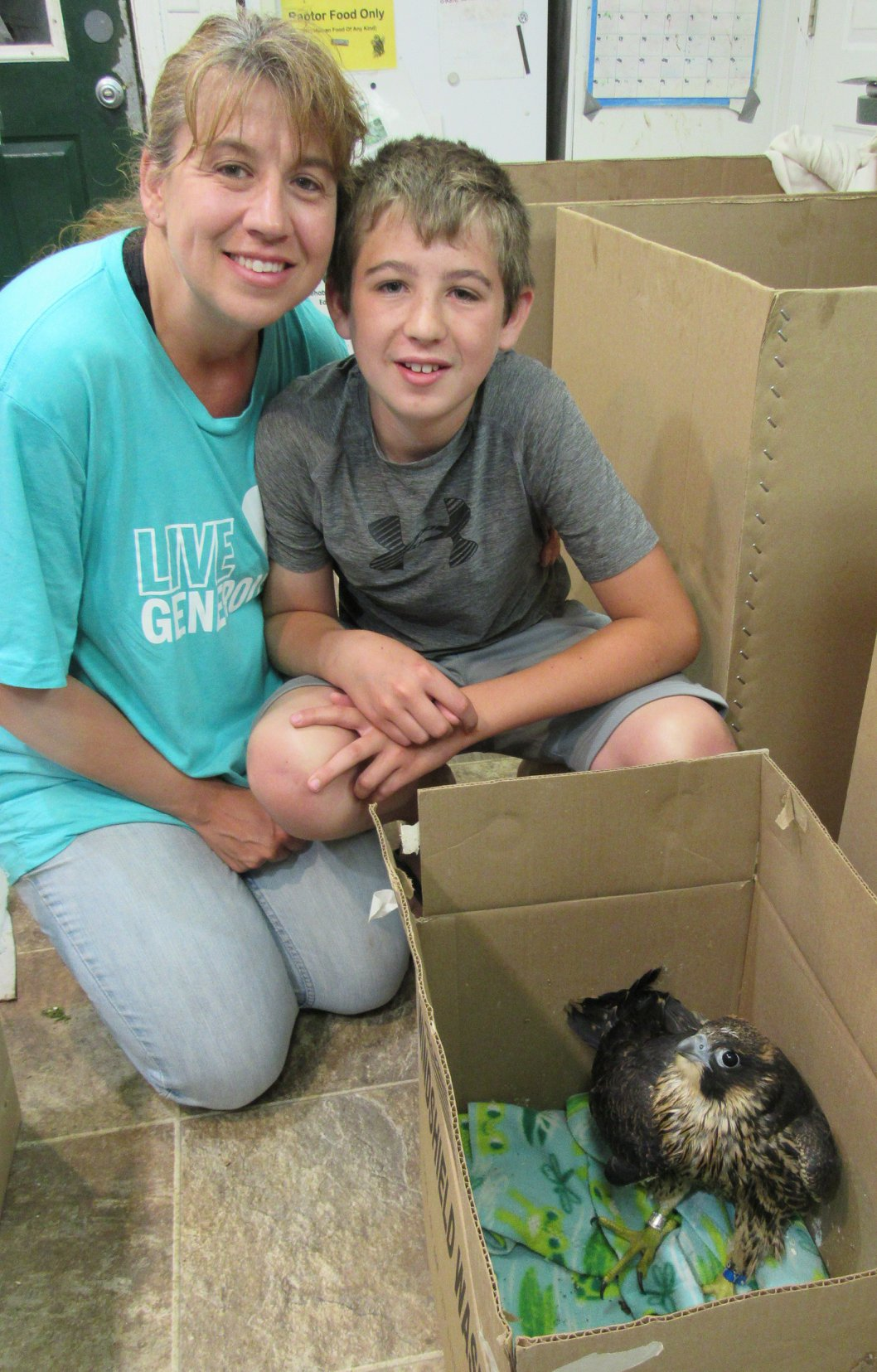 We are grateful to the entire Steffen family for rescuing this peregrine falcon chick and then transporting her to REGI for care.