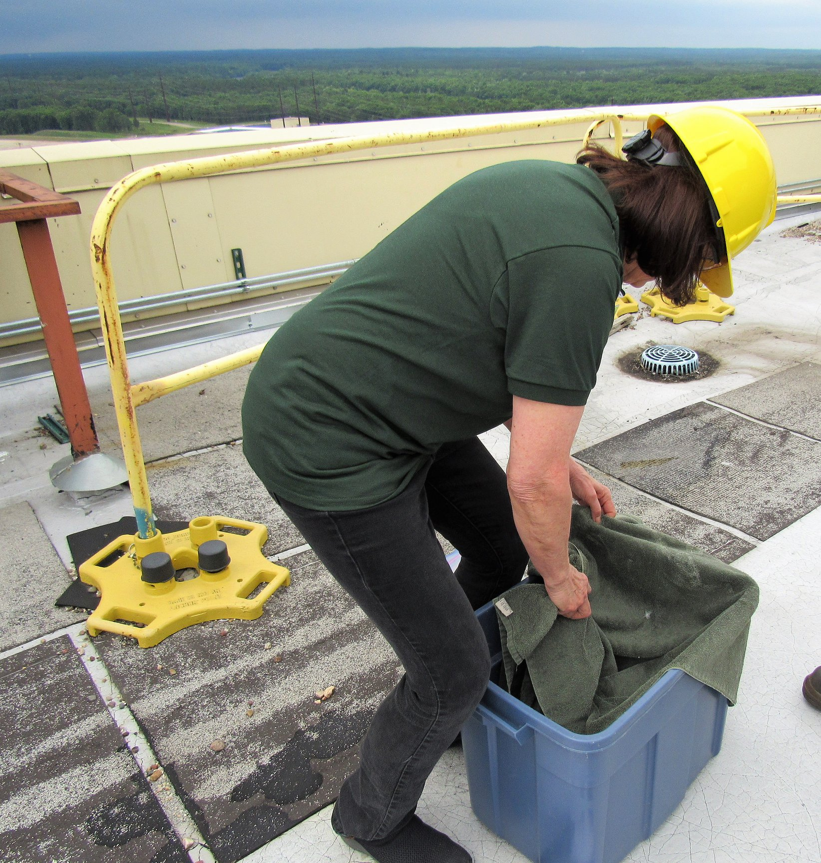 On the roof of the Power Plant and preparing to take the chick from the transport box.