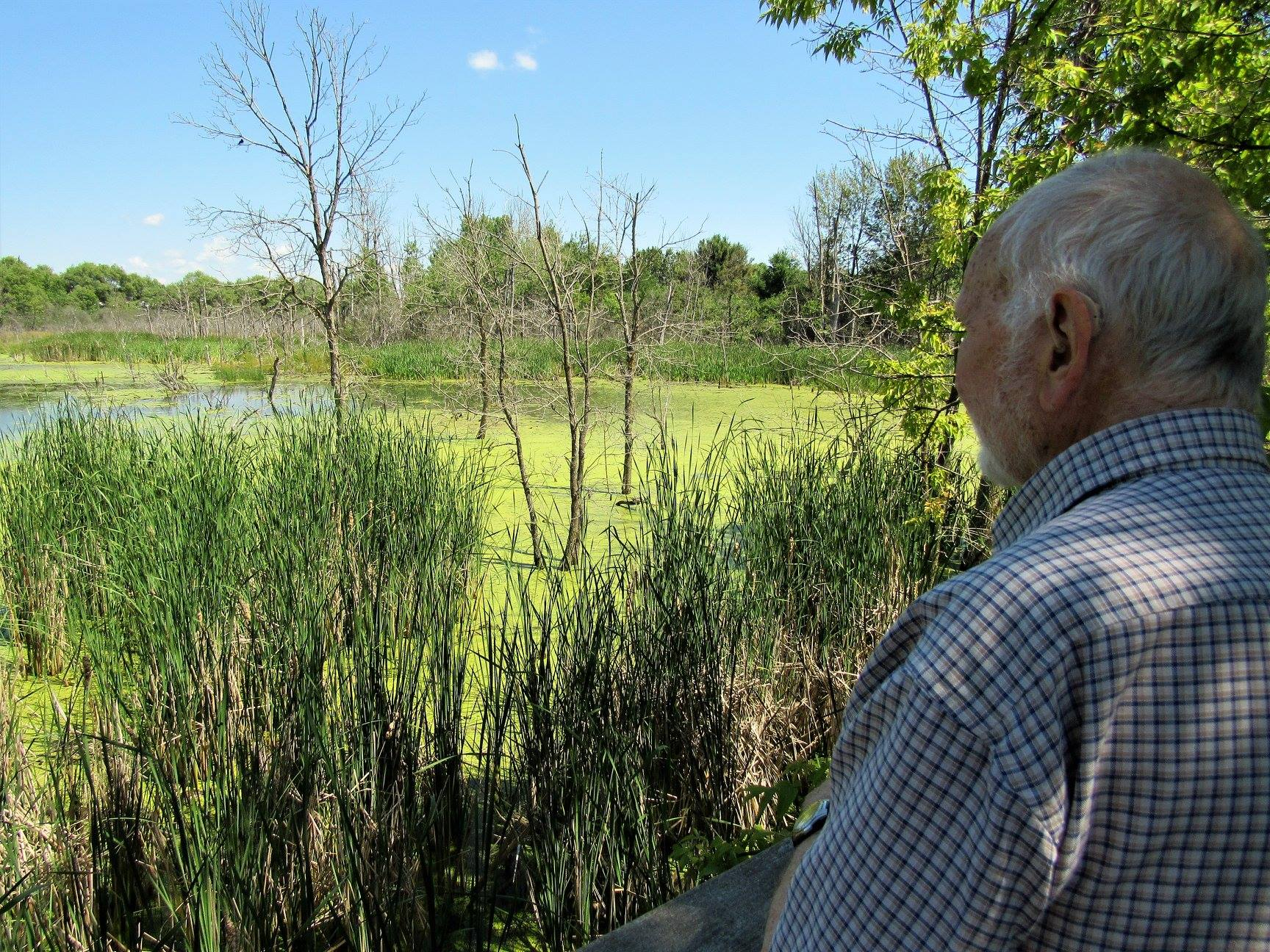 Duck release site is inaccessible, wild and great habitat with lots of natural food.