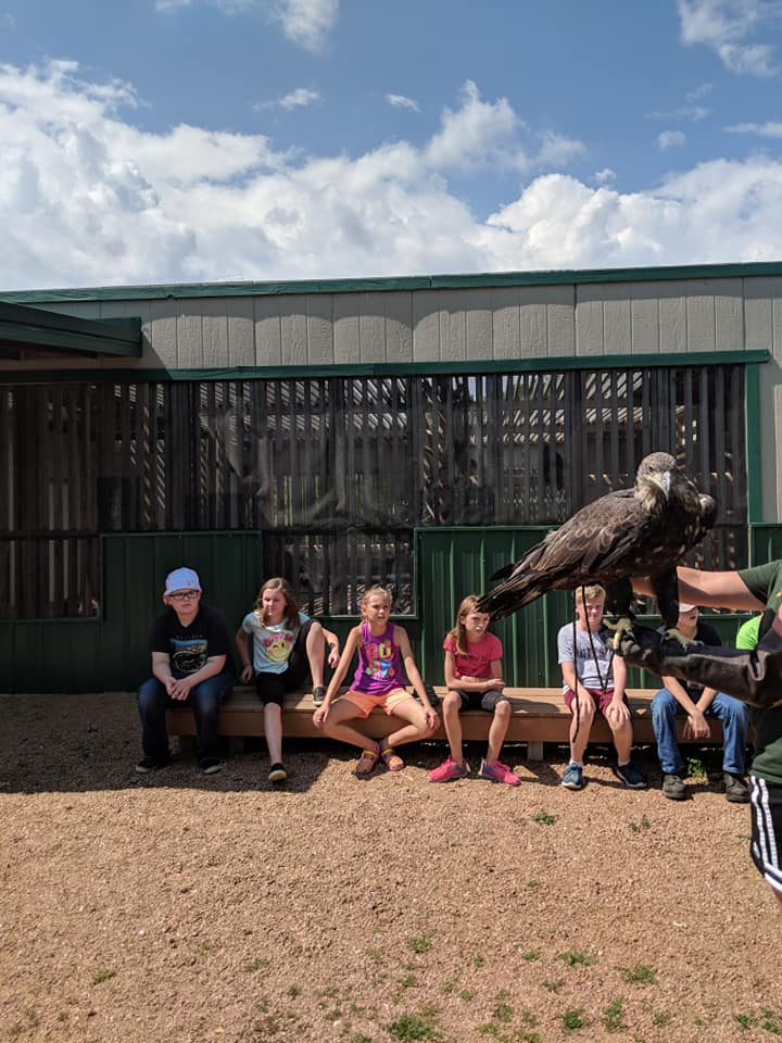 Campers got to meet a very special bald eagle!