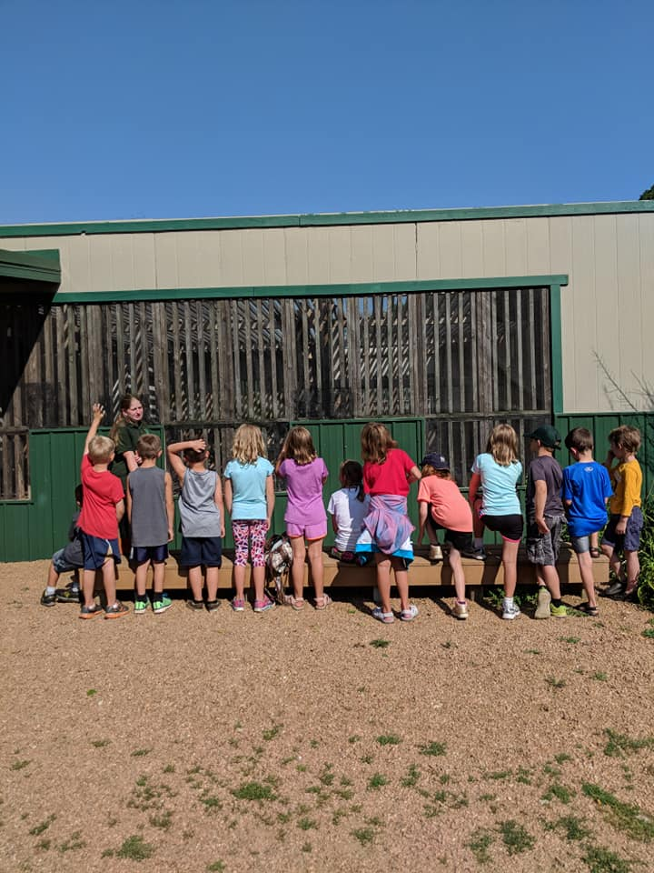 Campers got to meet some of our resident turkey vultures, crows and ravens.