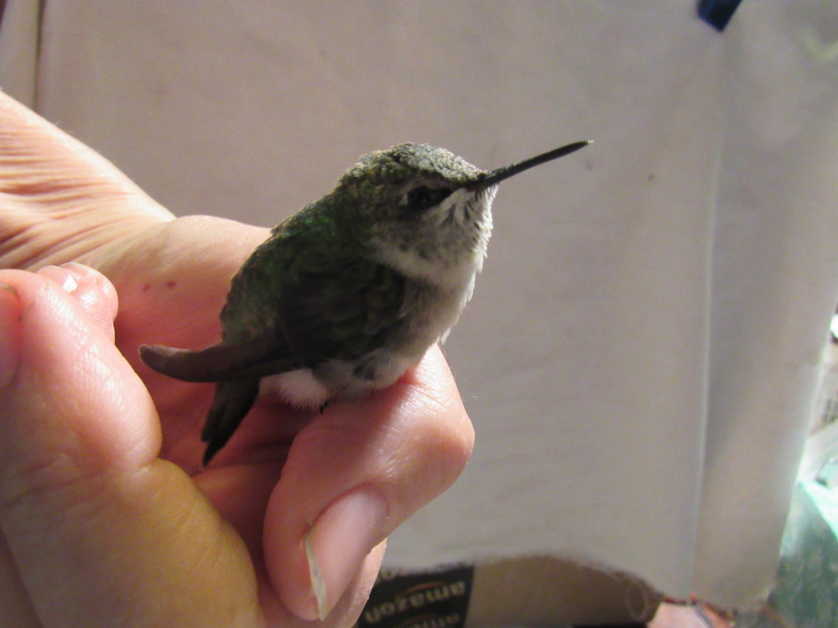 Hummingbirds are a well loved species. TIny tots they are very susceptible to chemicals, herbicides or pesticides put on or near flower gardens.