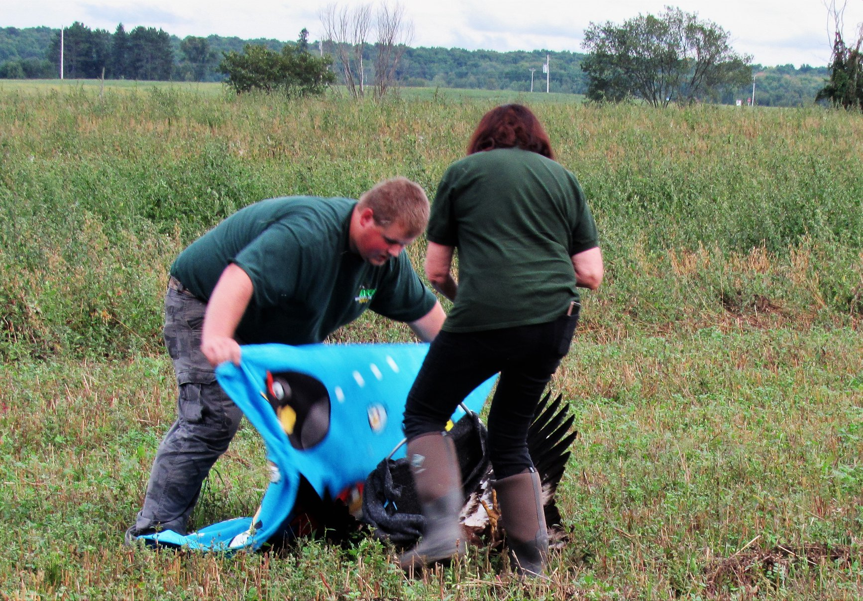 Hunter Petroskey helped in the capture of the bald eagle in the field in Polar, WI