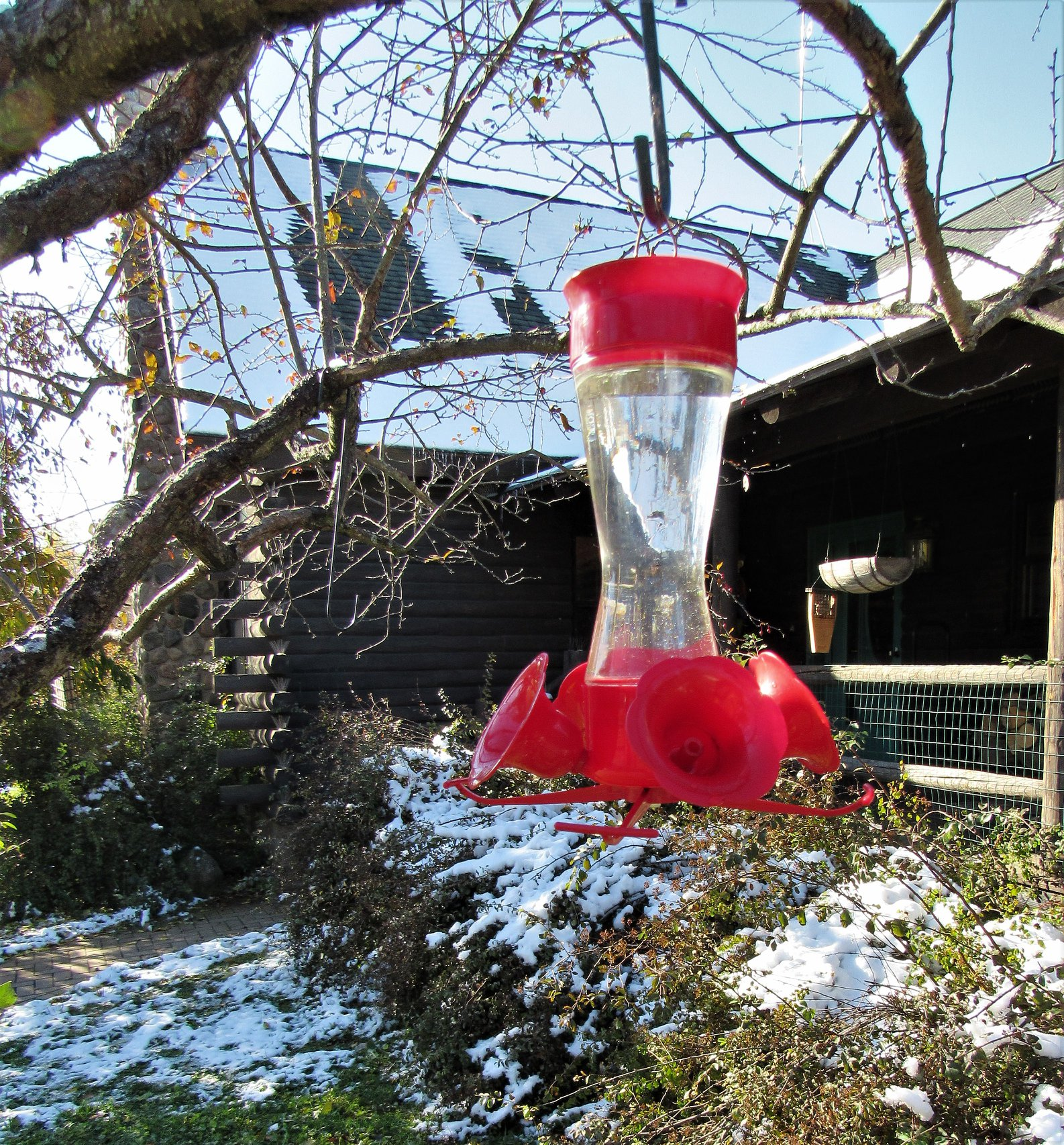 Snow on the roof and on the ground but hummingbirds remain in our area. Keep your feeder out!!