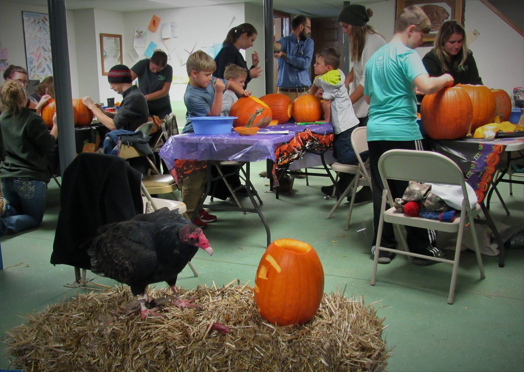 Morrie the Turkey vulture kept on eye on everyone during the event while enjoying his own pumpkin!