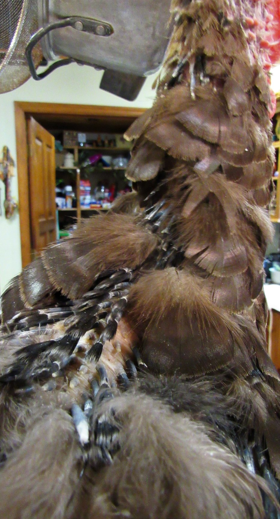 Oh the itchiness of feathers coming in...these on Grace's neck and back of her head.:)