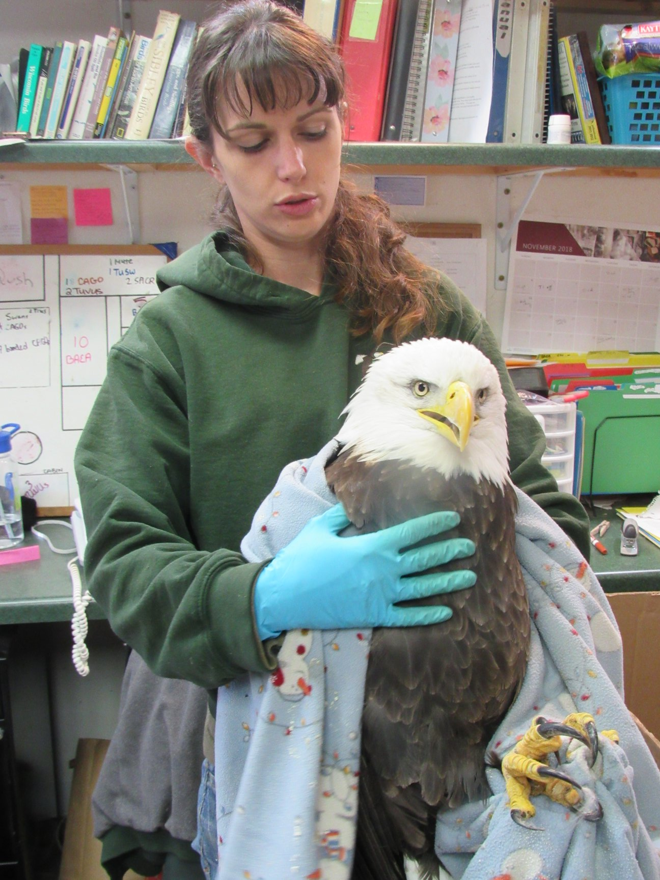 This is the lovely lady Bald Eagle from Keshena. She is improving but continues to have breathing problems.