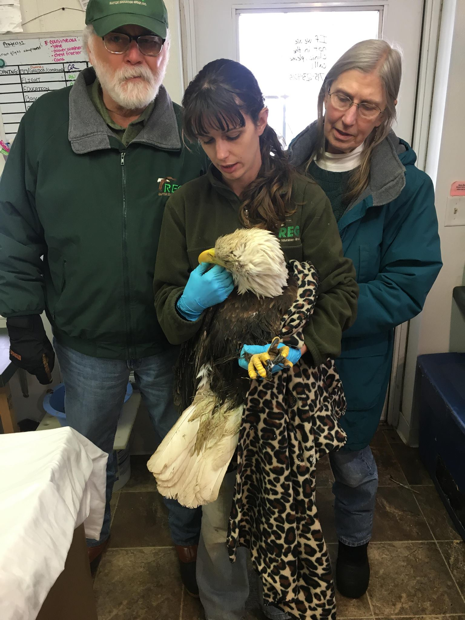 Thanks to Steve Fisher and Evie Fisher for transporting this critically ill bald eagle from Hayward.