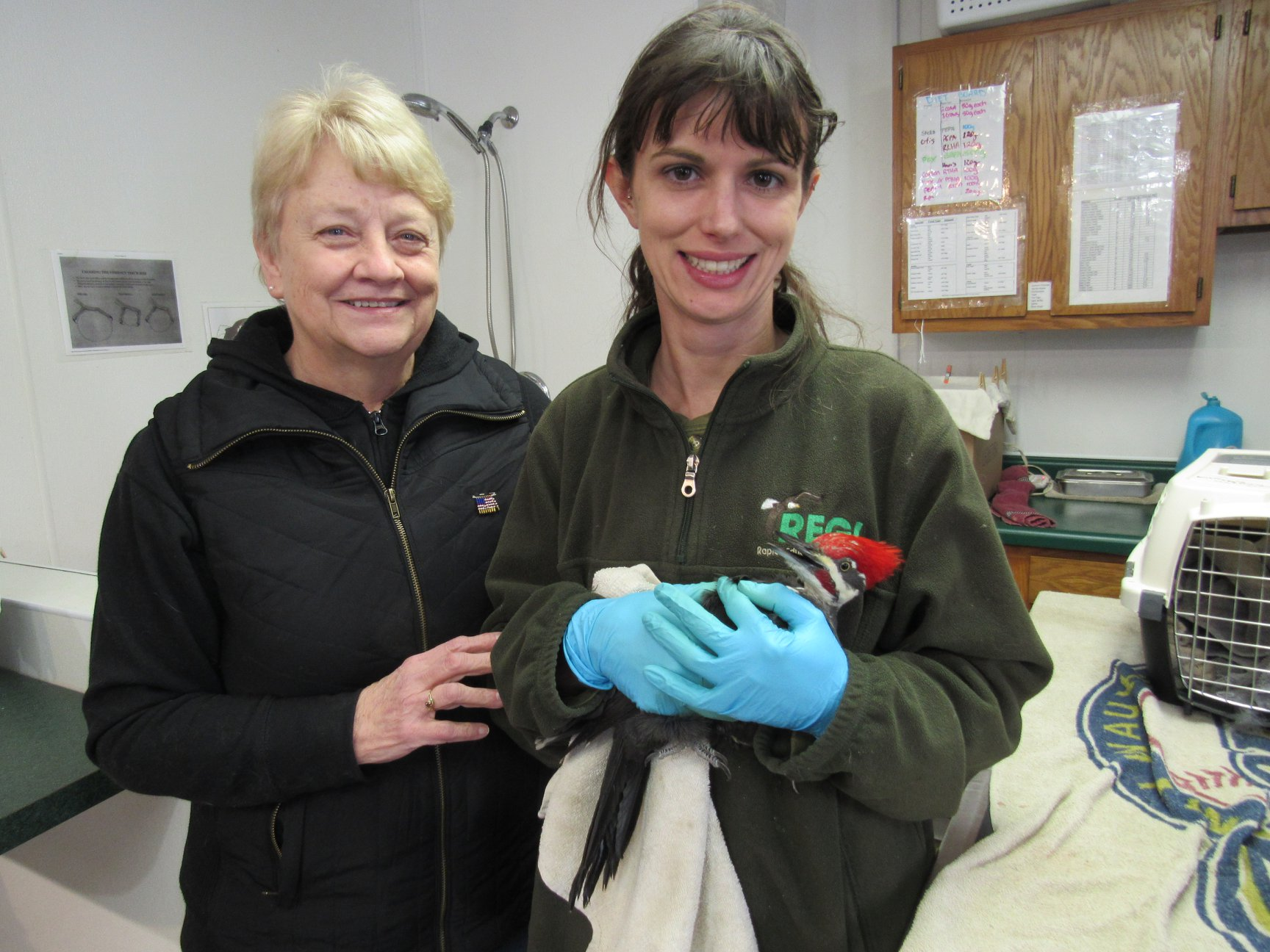Mary M. found the injured woodpecker, brought him in for care and then released him. His mate was very happy he came back home again. Thanks so much Mary.