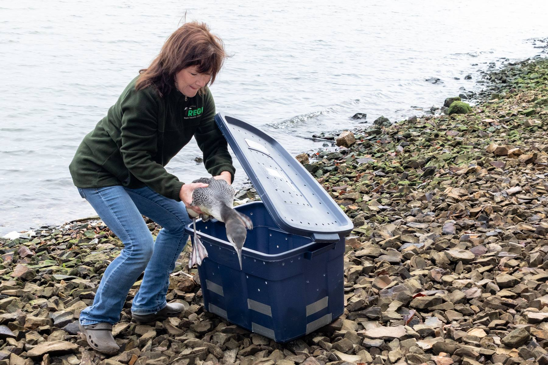 Linda Linda Kevin Grenzer taking a loon from a carrier for release.