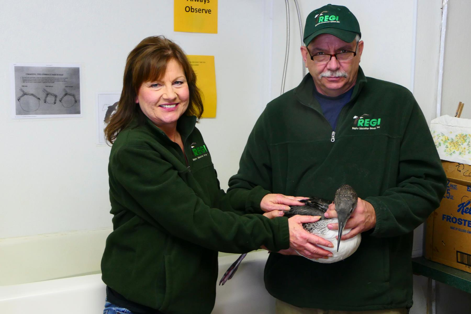 Kevin Grenzer and Linda Kevin Grenzer wtih one of their loon rescues back at REGI.