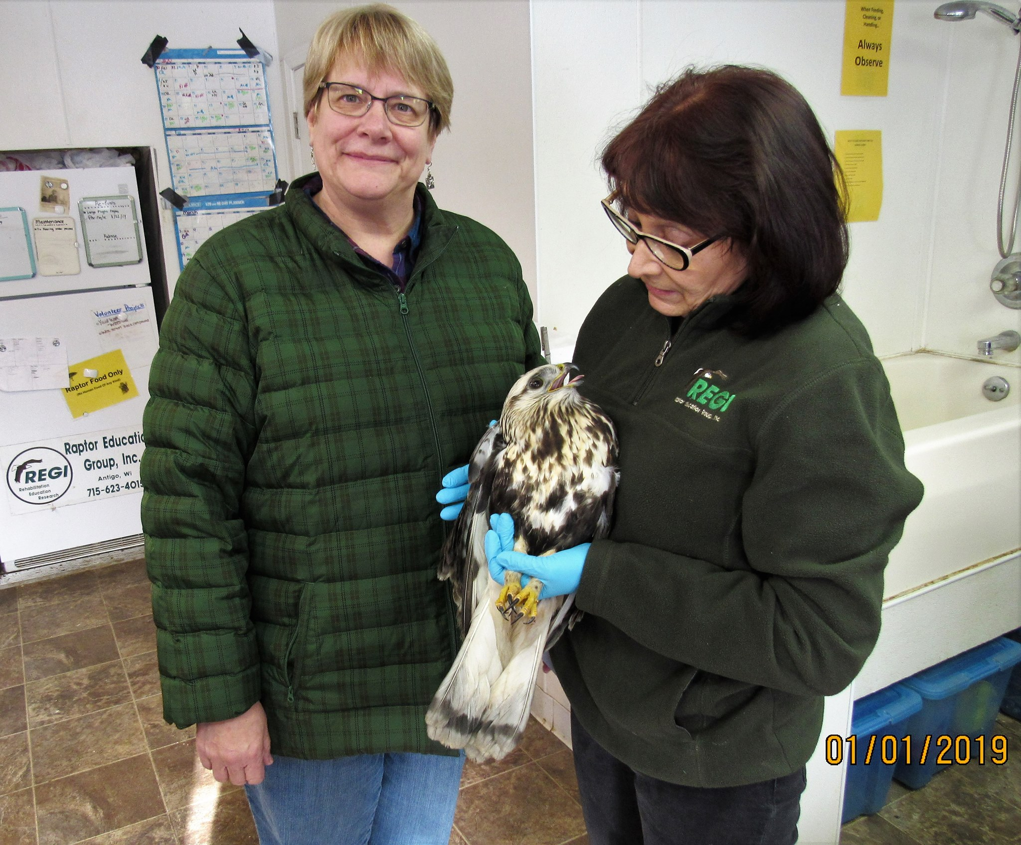 Thank you to Dawn Stein for transporting this stunning hawk to REGI.