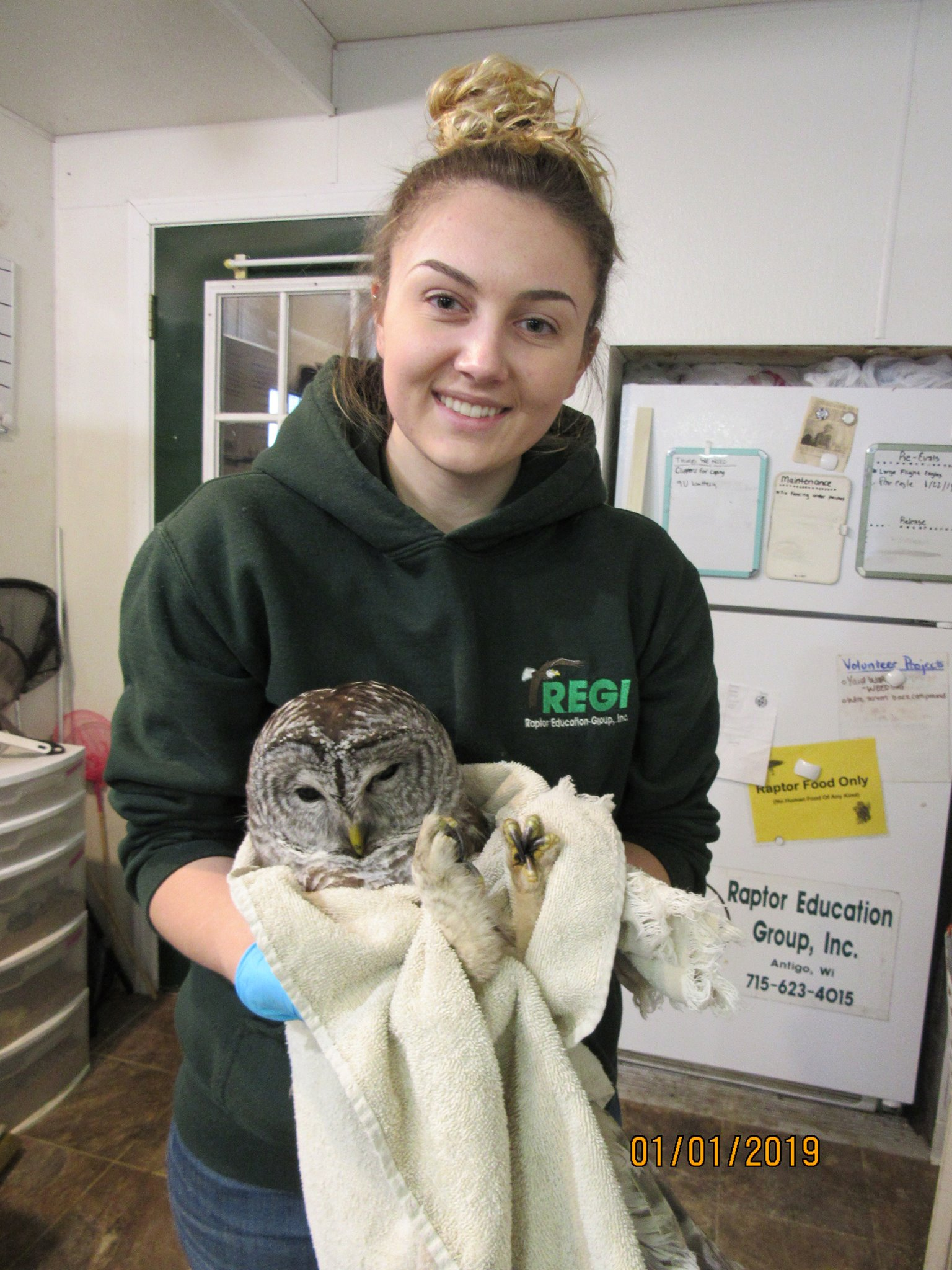 Molly, our winter interim intern prepares to tube feed the Barred Owl today. The owl is improving.