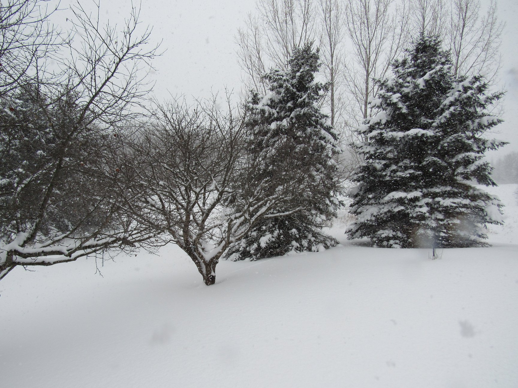 Our trees look shorter but they are overpowered by the snow depth.