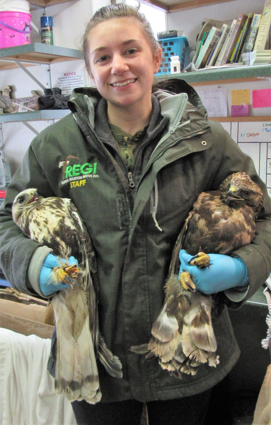 Katie  Needles with a male light morph RLHA and a female dark morph RLHA. As  they head out to their enclosure after a physical today.