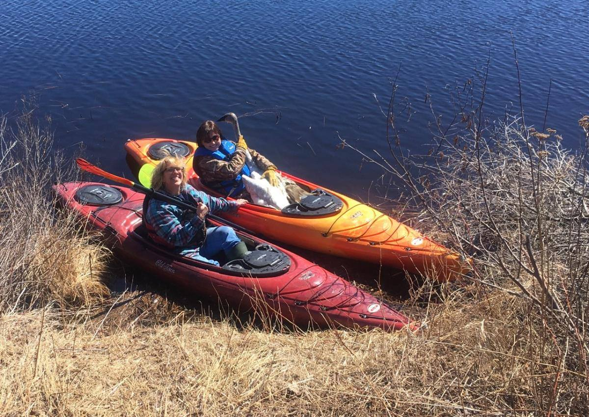 Linda Grenzer had her first kayak ride this season in the rushing waters of the WI River as she and Holly Ranke rescued the critically injured Trumpeter Swan. Thanks Holly for providing the kayaks.