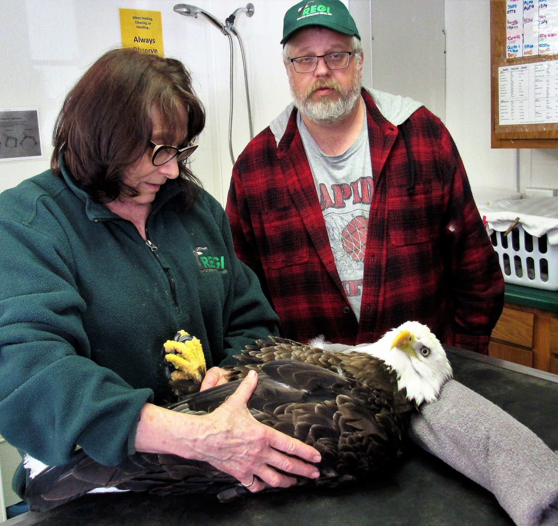 Thanks to Mark O'Shasky for transporting the Bald Eagle to REGI for care.