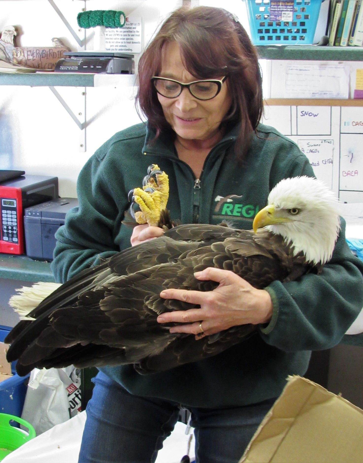 An  adult Bald eagle was rescued by DNR Warden Erika Taylor and transported  to REGI by Mark O;Shasky, The eagle has lead poisoning and a wing  fracture.