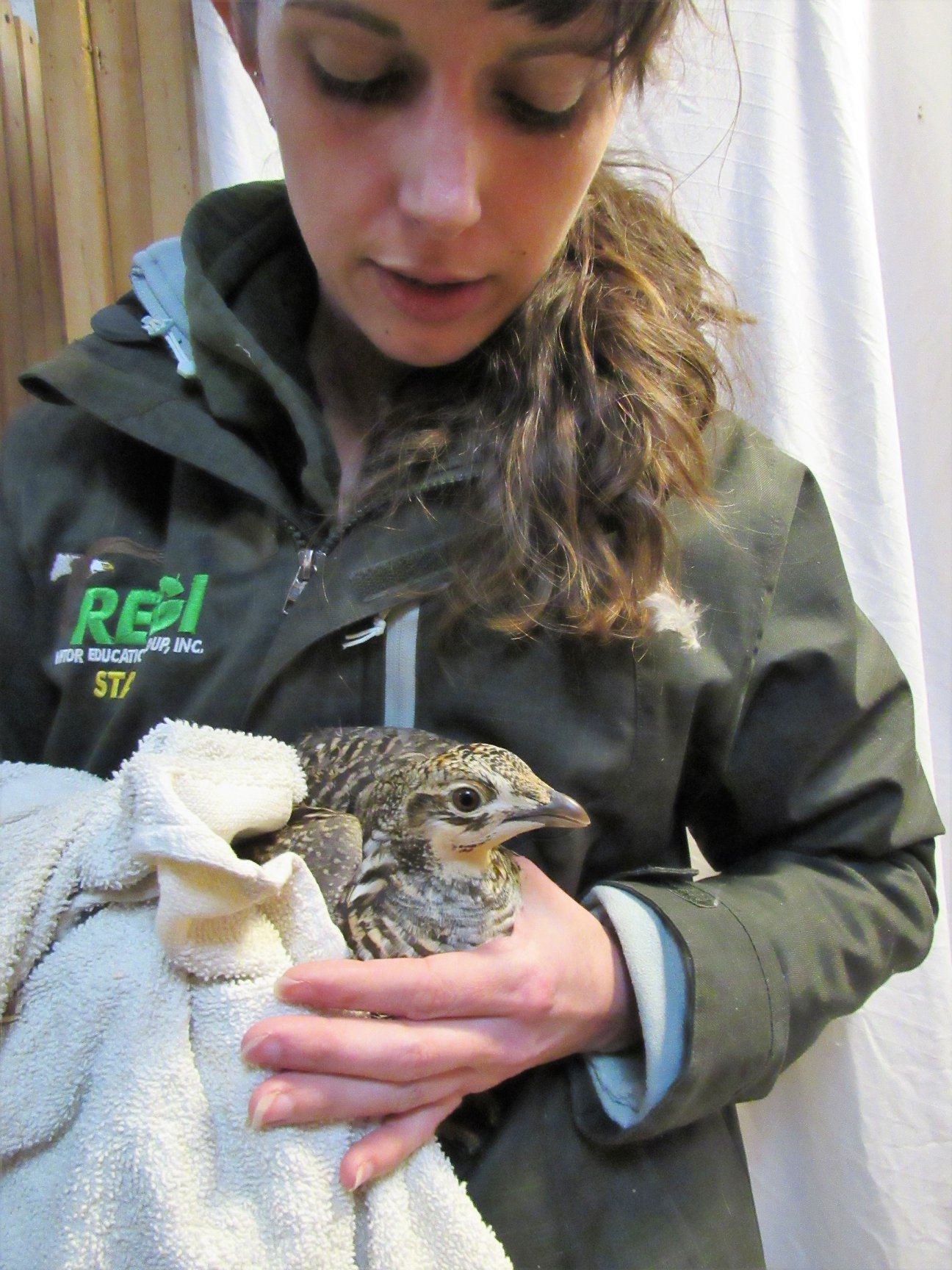 Prairie Chicken looking better by her exam in early April.
