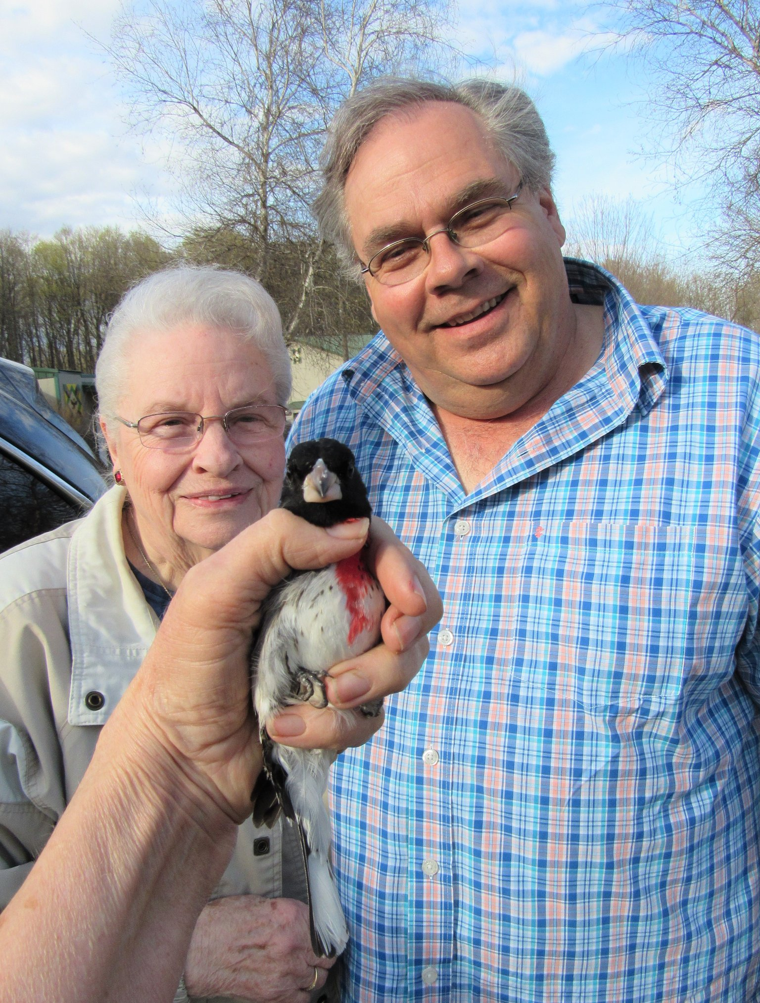 Dwaine Packard and his mom rescued a young male Rose-breasted Grosbeak that was hit by a vehicle and injured by a cat.
