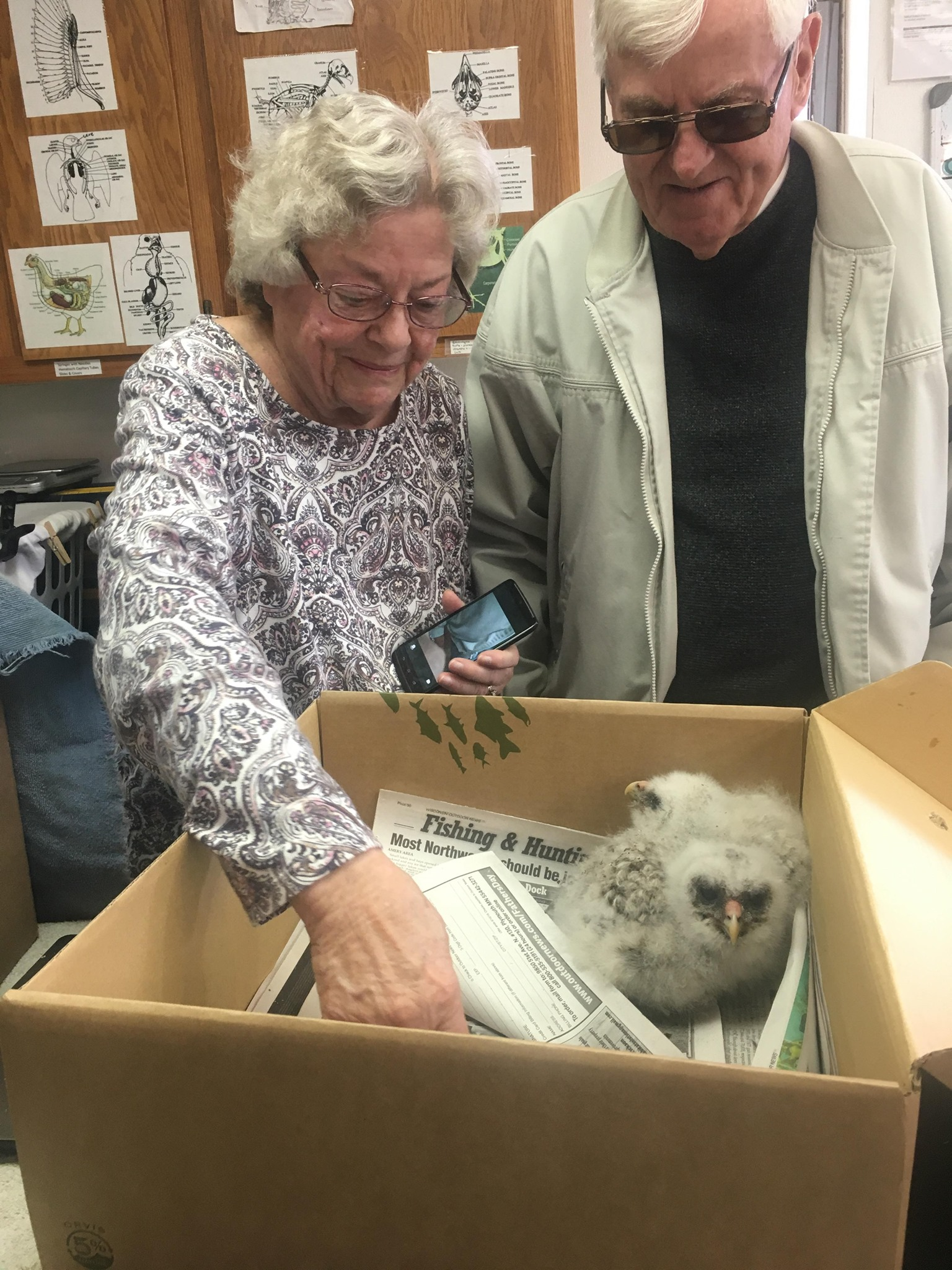 The Knutsons are wonderful volunteer transporters from the WI Rapids area. This week they transported two young Barred Owls that were injured when their tree was cut down. A young Great-horned Owl was injured when it feel from its nest.