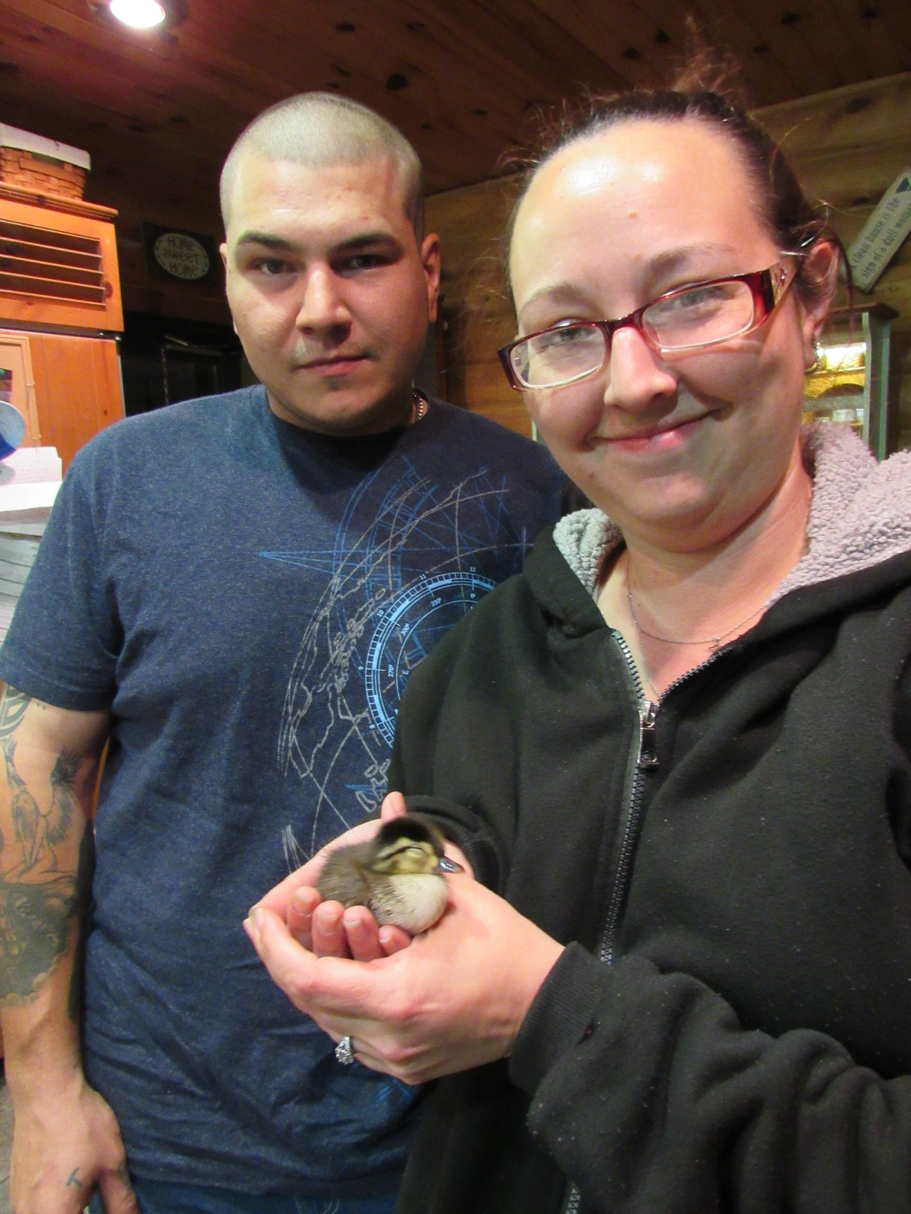 A tiny Wood duck was rescued from a road and is now much bigger and doing well.