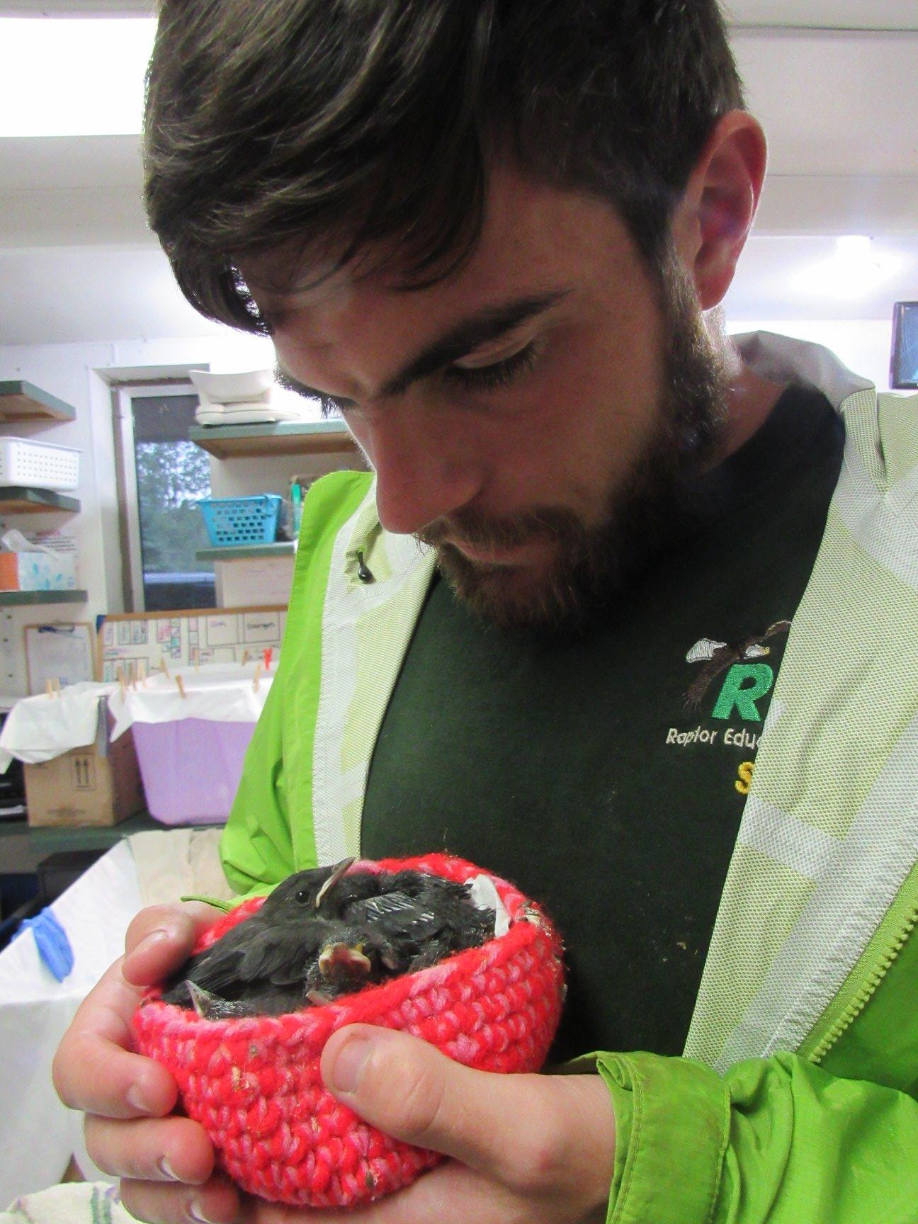 Baby Catbirds are adorable! Christopher Ryan Pavlakovich intern from Humboldt State University, Arcata, CA