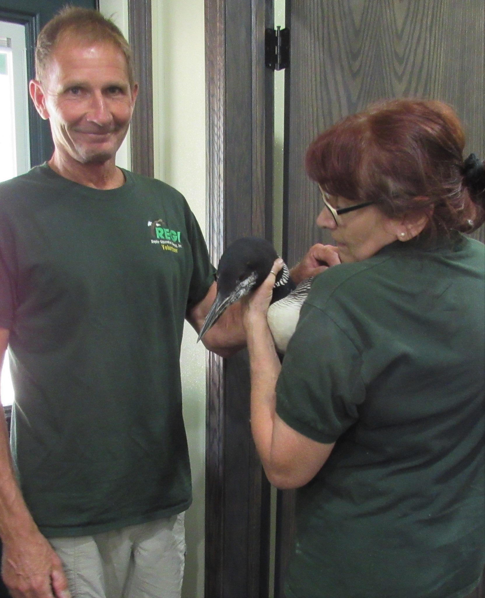 Jeff Konopacky transported an adult loon found in Portage County. We had no idea at this point that she had been shot,