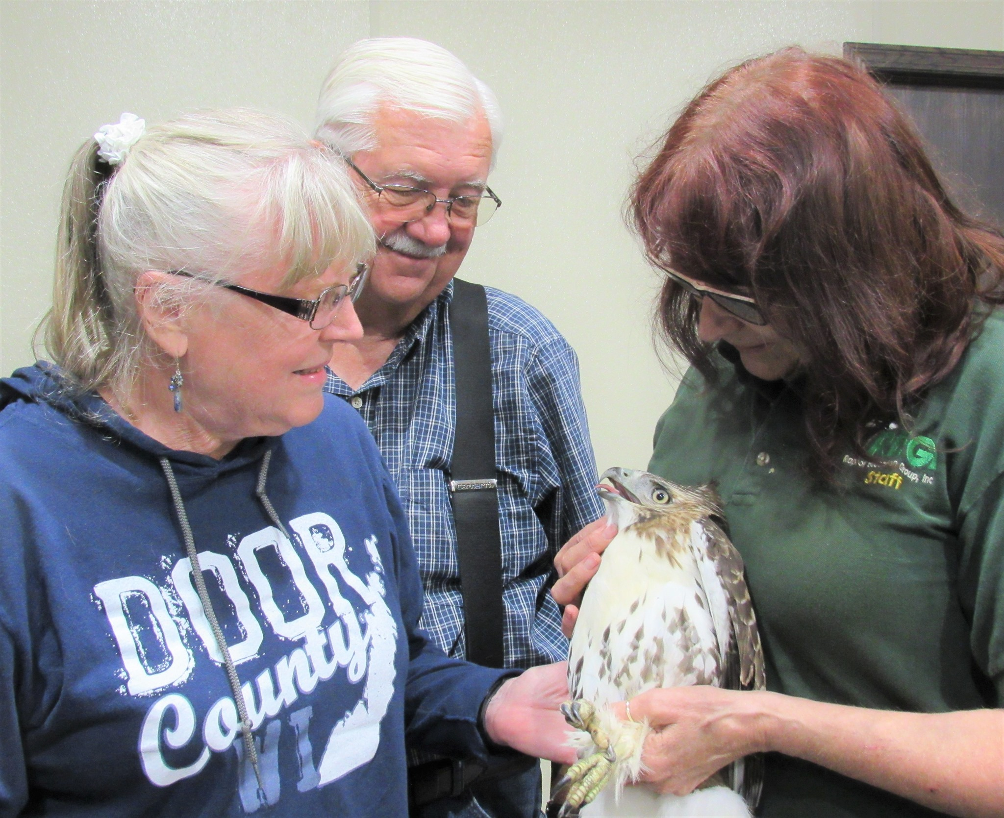 Dan and Dixie transported this hawk to us from WI Dells area.