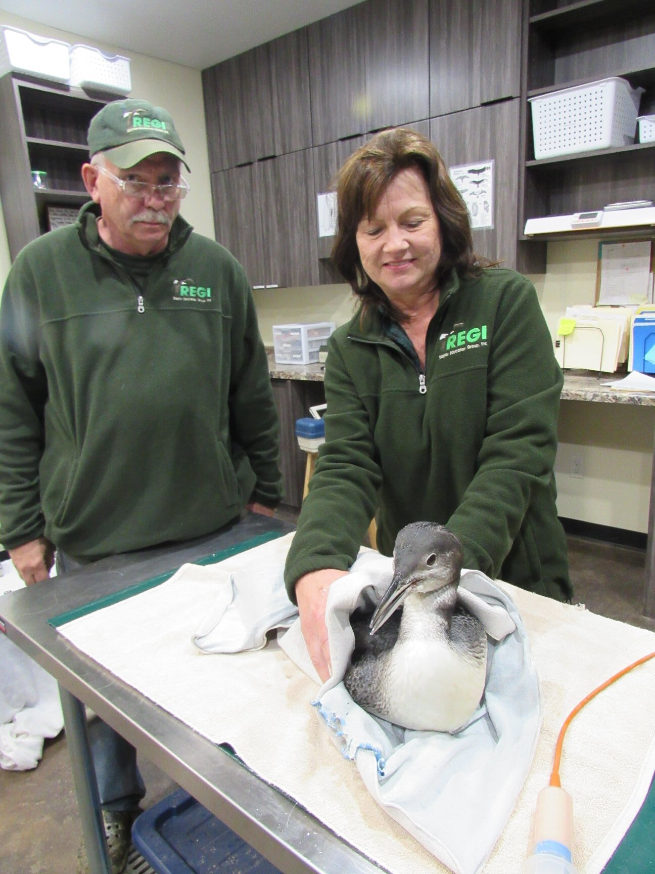 The line off and the loon was tube fed and on her way to a recovery enclosure for the night.