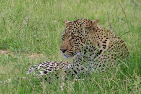 Kruger09 090.jpg